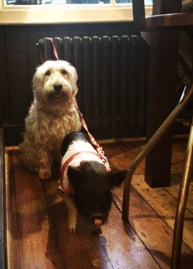 Pig in a Pub.