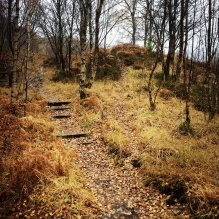 Golden forest floor, walk to Grey Mare Falls